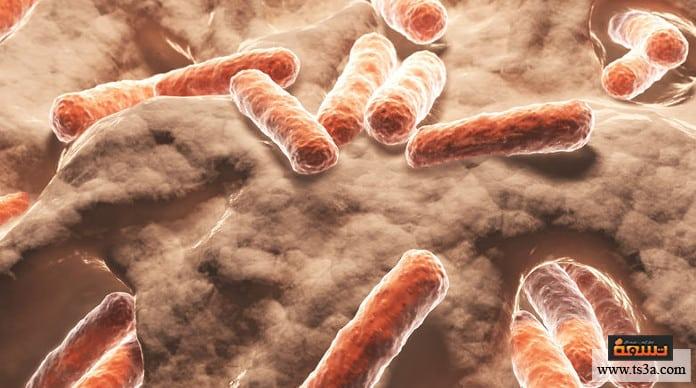 البكتيريا المفيدة البكتيريا المفيدة للمناعة