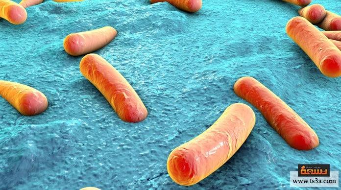 البكتيريا المفيدة