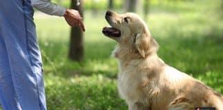 ترويض الكلاب