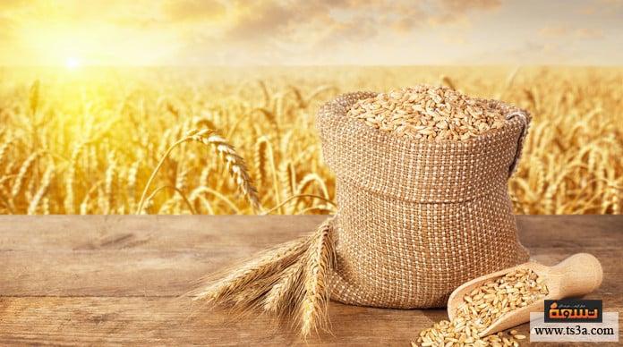 زراعة القمح أنواع القمح