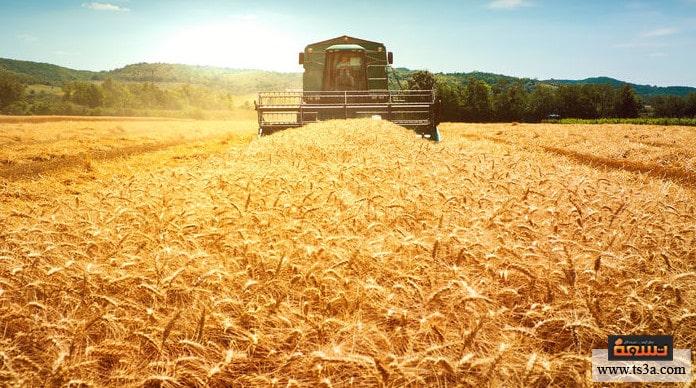 زراعة القمح التربة الصالحة لزراعة القمح