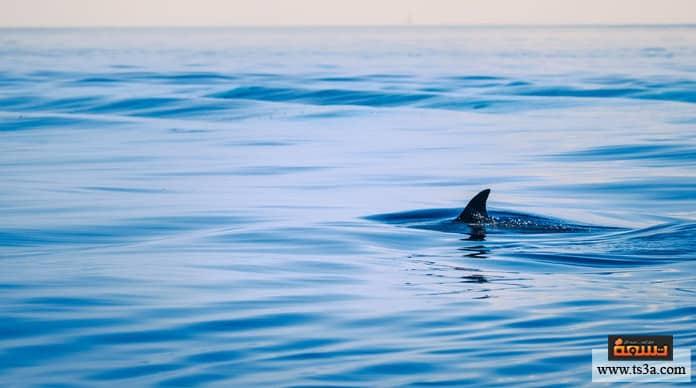 هجمات أسماك القرش إن كنت مصاب بجرح فالأفضل عدم نزول البحر