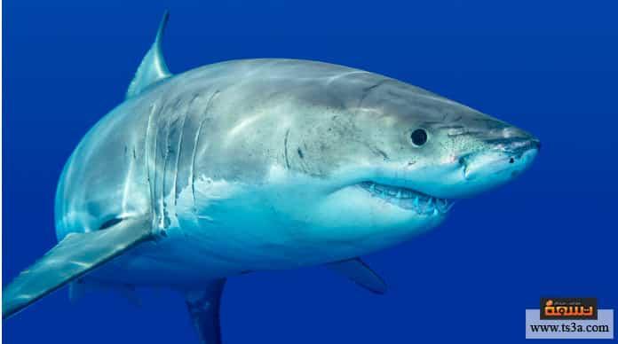 هجمات أسماك القرش