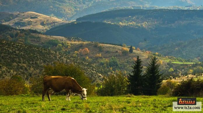 السياحة في صربيا أفضل المطاعم التي يمكنك زيارتها في صربيا