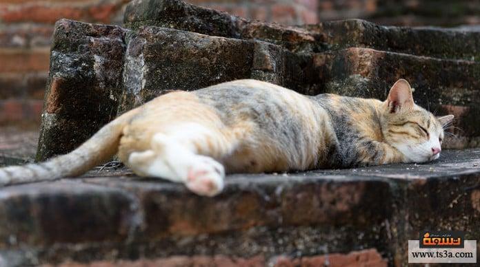 كيف تكتشف حمل القطط 10 علامات تخبرك بأن قطتك حامل تسعة