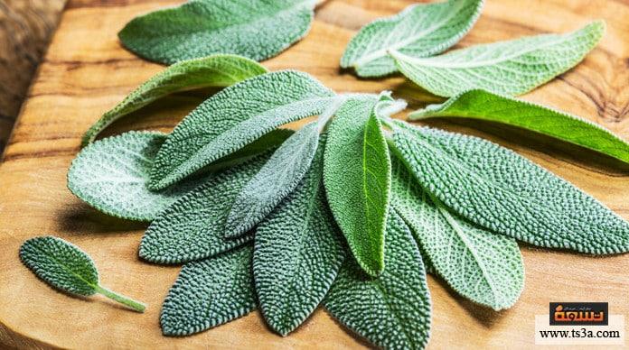 عشبة الميرمية فوائد علاجية لعشبة الميرمية