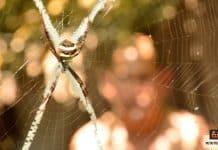 فوبيا الحشرات