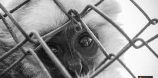 حقوق الحيوانات