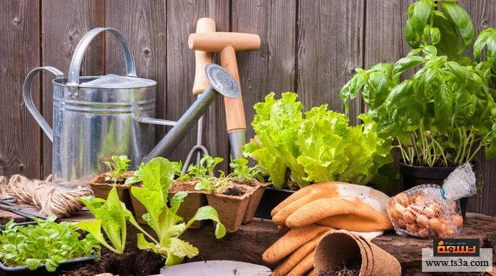 عمر نباتات المنزل كيف نمد عمر نباتات المنزل ؟