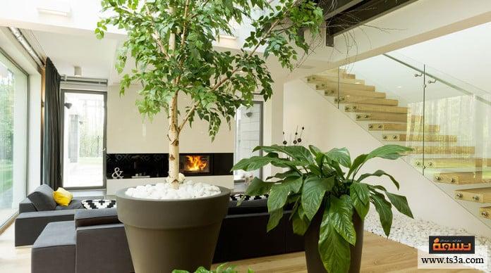 عمر نباتات المنزل