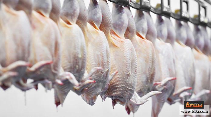 الدجاج المجمد أيهما أفضل الدجاج المجمد أم الطازج؟