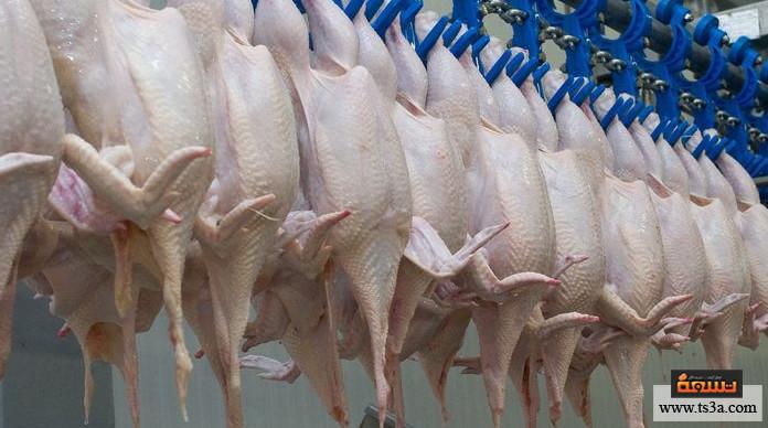 الدجاج المجمد اللون الأزرق على جلد الدجاج المجمد