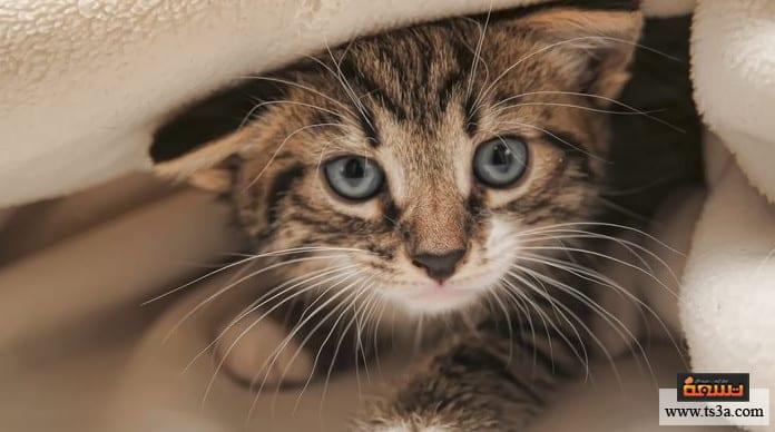 تدريب القطط على الطاعة كيفية تدريب القطط على اسمها