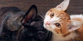 تدريب القطط