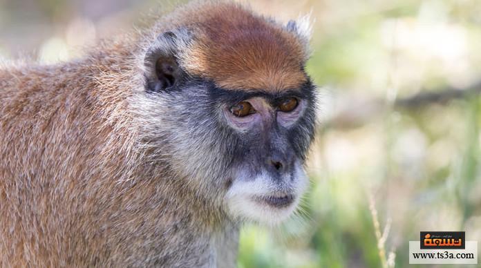 ترويض القرود ما الأنواع التي يمكن ترويض القرود بها؟