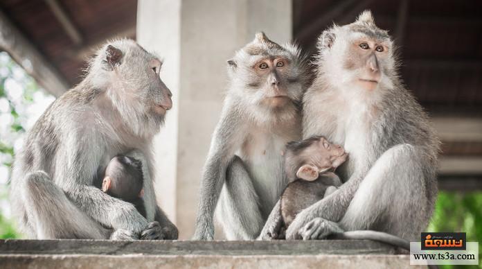 ترويض القرود ما حكم تربية القرود في المنزل؟