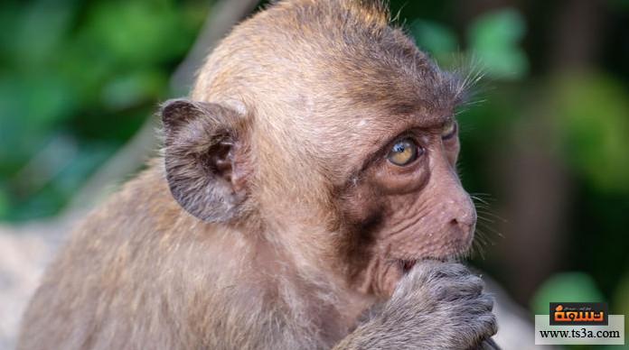 ترويض القرود ما مخاطر تربية القرود؟