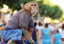 ترويض القرود