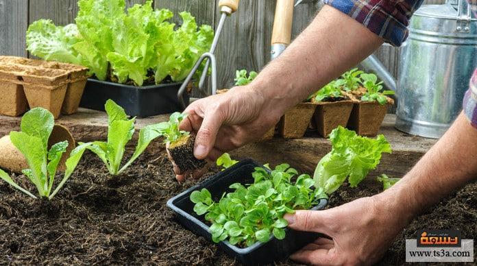 تنسيق الحديقة المنزلية حديقة الخضروات