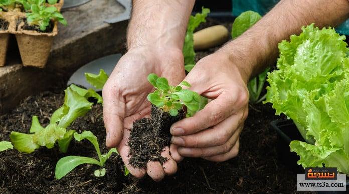 تنسيق الحديقة المنزلية ما فوائد الاهتمام بالحديقة المنزلية؟