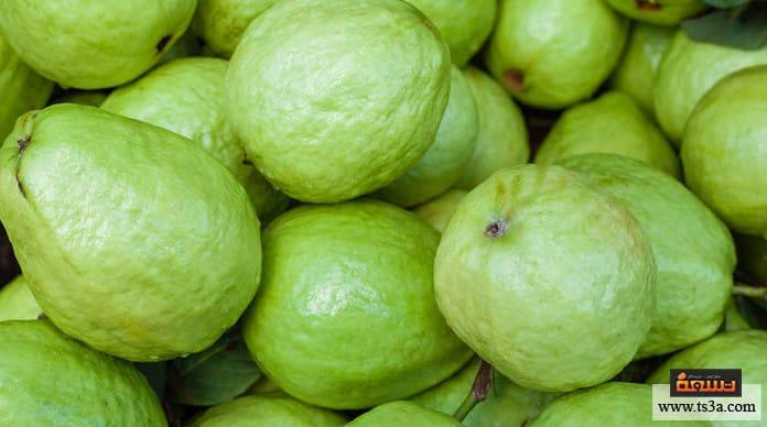 زراعة الجوافة زراعة الجوافة