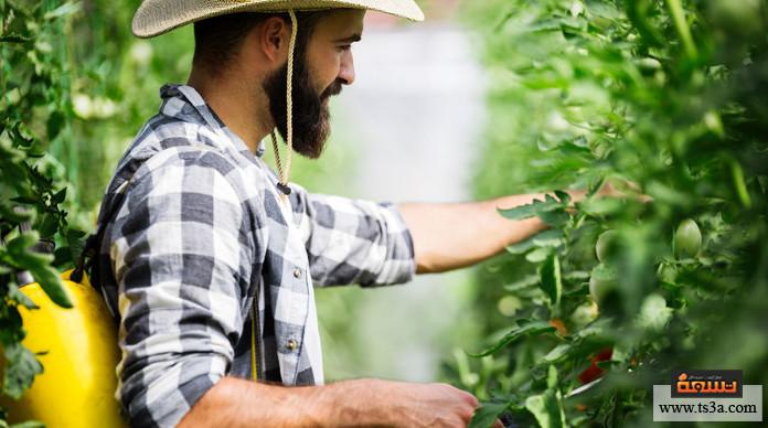 آفات المحاصيل ما الوسائل والبدائل الآمنة للتخلص من آفات المحاصيل؟