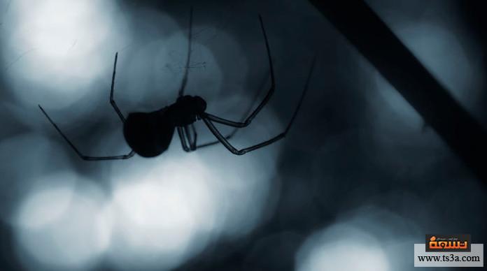 الحشرات المتطفلة التخلص من حشرات العناكب