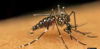 الحشرات المتطفلة