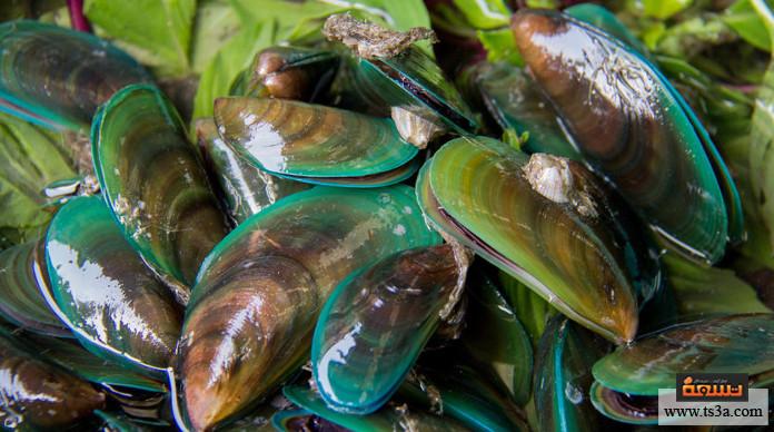 بلح البحر القيمة الغذائية لبلح البحر