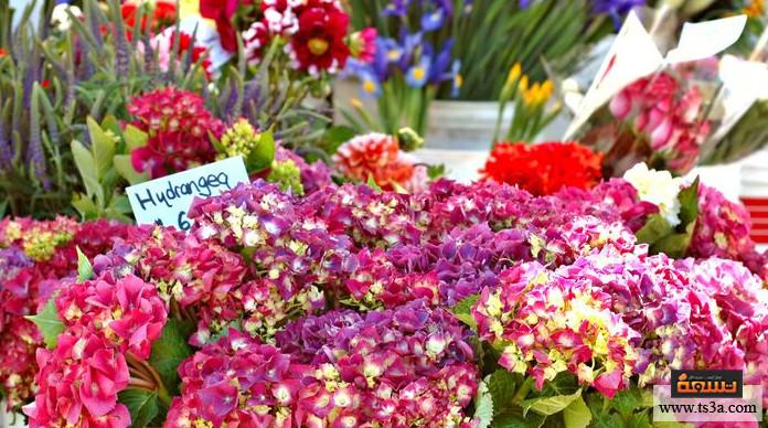 تنسيق الزهور على الطريقة اليابانية كيف يختلط الفن بالإنسانية في فن تنسيق الزهور على الطريقة اليابانية ؟