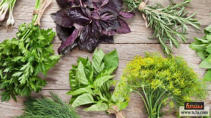 حفظ الأعشاب الخضراء طريقة حفظ الأعشاب الخضراء