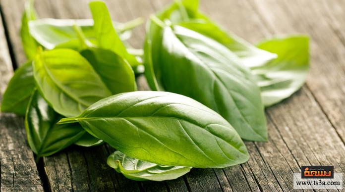 حفظ الأعشاب الخضراء طريقة حفظ الحبق بالفريزر