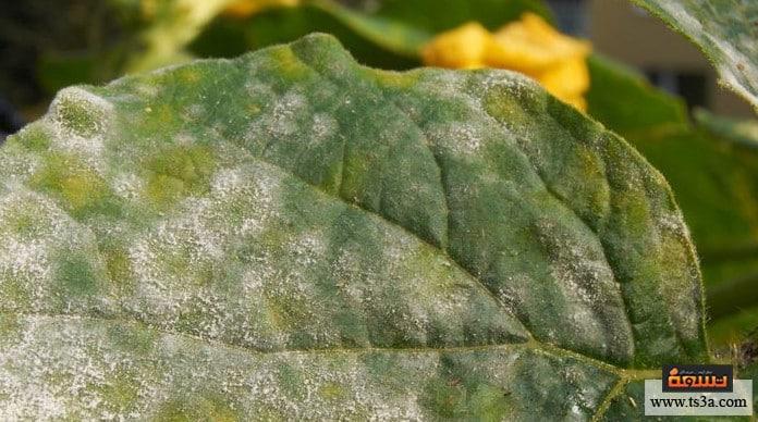 أمراض الفواكه ما هي أشهر أمراض الفواكه ؟ وما أسبابها؟