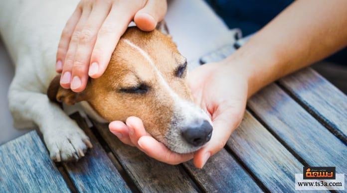 إقناع الأهل باقتناء حيوان أليف سر إصرار الأبناء على اقتناء حيوان أليف