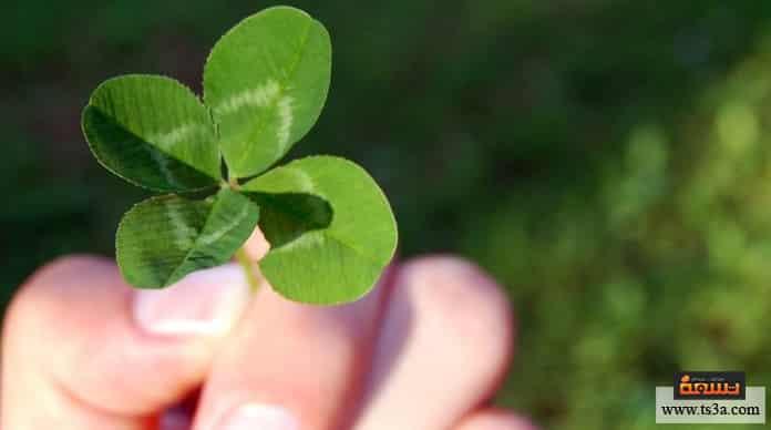 الاعتماد على الحظ هل الاعتماد على الحظ وحده يكفي؟
