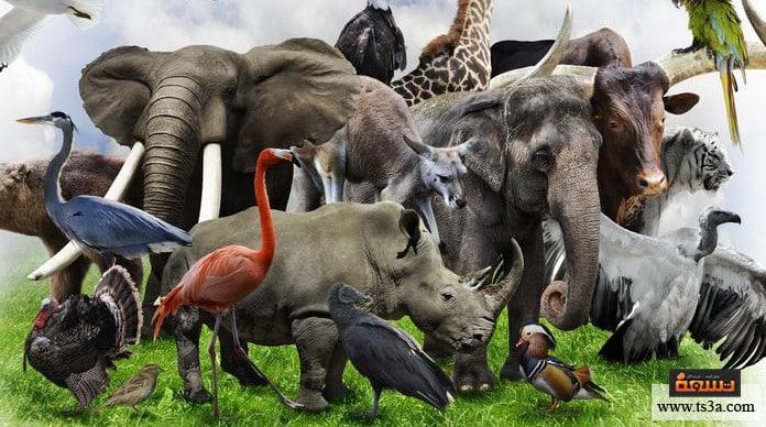 الحيوانات آكلة اللحم ما هو الحيوان اللاحم؟