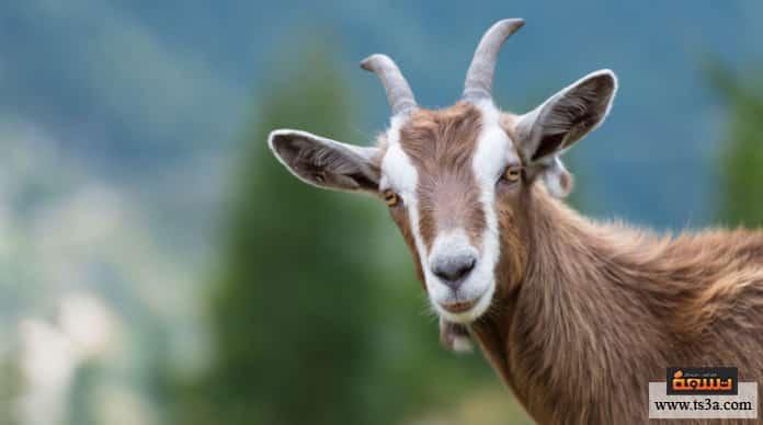 تدجين الحيوانات معايير الحيوانات المدجنة