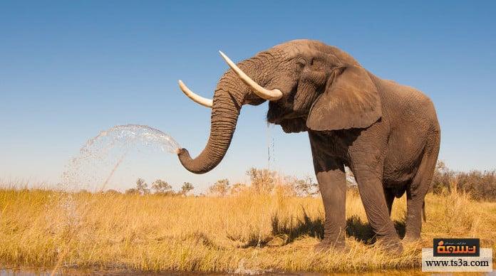 خرطوم الفيل فائدة خرطوم الفيل