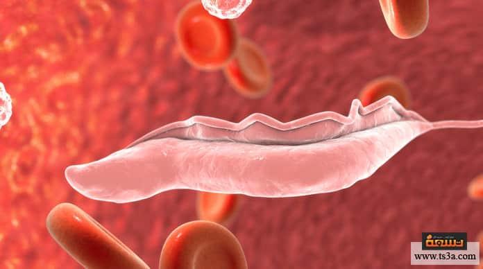 ذبابة التسي تسي دورة حياة طفيل التريبانوسوما