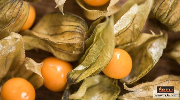 زراعة الحرنكش ما هو نبات الحرنكش؟