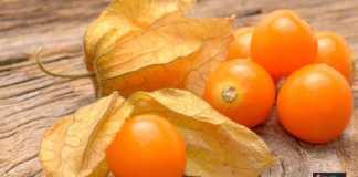 زراعة الحرنكش