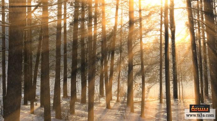 شمس الشتاء