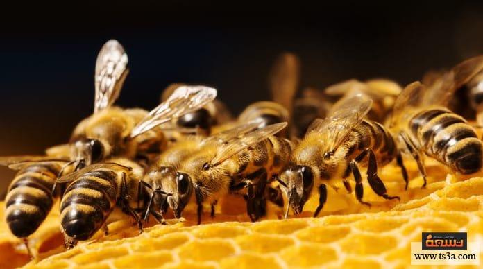 شمع العسل ما هي أضرار أكل شمع العسل ؟