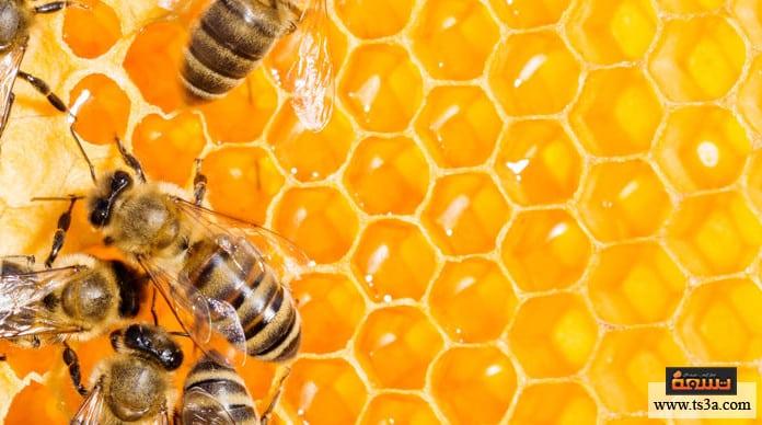 شمع العسل