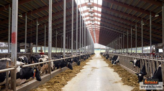 مزرعة ماشية مزرعة ماشية