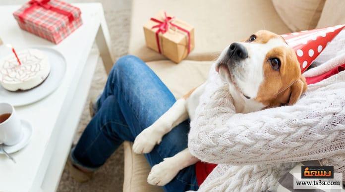 شيخوخة الحيوانات الأليفة الأطعمة المناسبة لحيوانك الأليف كبير السن