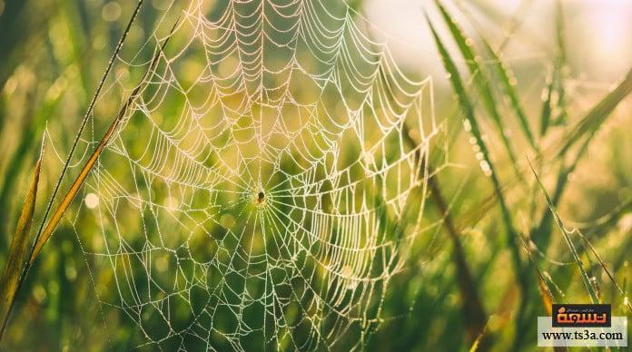 صناعة الحرير ما هي دودة القز؟