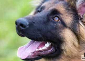 أكاديمية تدريب الكلاب