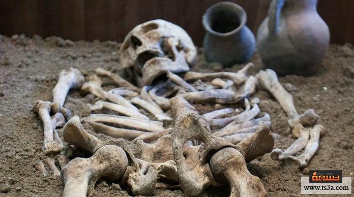 الطب في العصر الحجري بتر الأعضاء باستخدام مخدر ومطهر