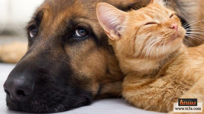 فندق حيوانات أليفة دراسة جدوى مشروع فندق حيوانات أليفة